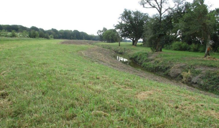 Ditch Banks 2020 Austin Bayou (2)
